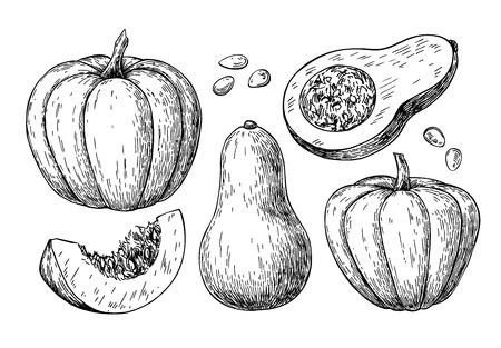 Ensemble de dessin vectoriel citrouille et courge musquée. Objet dessiné à la main isolé avec morceau en tranches et graines. Illustration de style gravé de légumes. Croquis détaillé de la nourriture végétarienne. Produit du marché agricole.