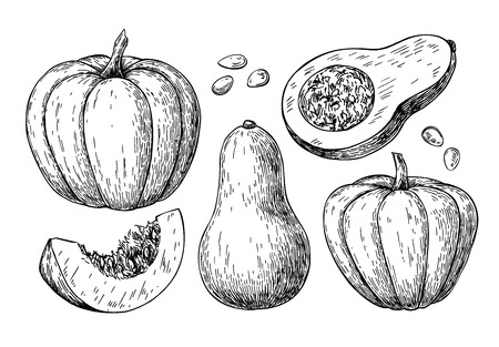 pumpkin seeds: Pumpkin and butternut squash vector drawing set. Isolated hand drawn object with sliced piece and seeds. Vegetable engraved style illustration. Detailed vegetarian food sketch. Farm market product.