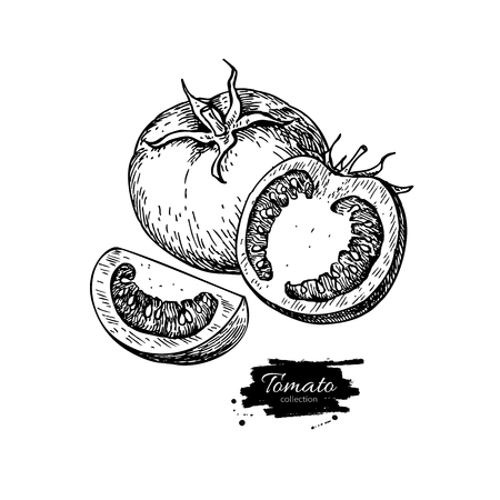 Tomato vector drawing. Isolated tomato and sliced piece. Vegetable engraved style illustration. Detailed vegetarian food sketch. Farm market product. Ilustração