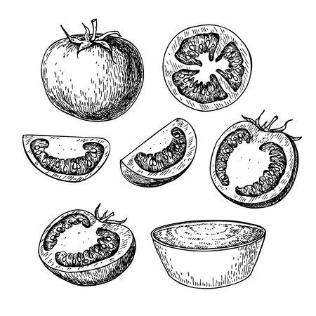 tomato sauce: Tomato vector drawing set. Isolated tomato, sliced piece and tomato sauce. Vegetable engraved style illustration. Detailed vegetarian food sketch. Farm market product. Illustration