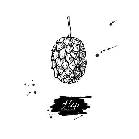 Hop plant vector drawing illustration. Hand drawn black beer hop. Vintage isolated object on  white background. Engraved element for label, banner, icon, menu, oktoberfest