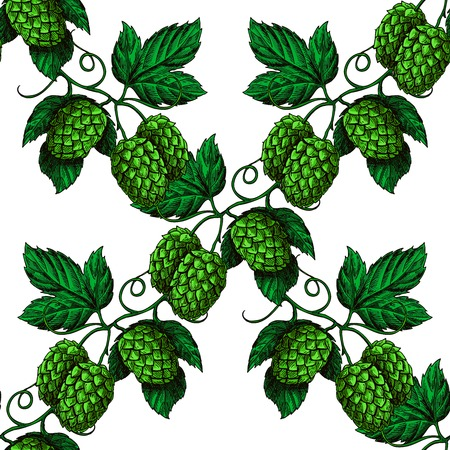 hopes: Hop vector seamless pattern. Hand drawn artistic beer green hopes with leaves on white background. Vintage wallpaper. Great drawing decor for oktoberfest or beer packaging Illustration