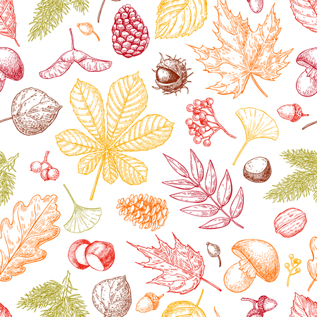 etch: Autumn seamless vector pattern with leaves, berries, fir cones, nuts, mushrooms and acorns. Detailed colorful forest botanical background. Vintage fall seasonal decor in yellow and red. Leaf drawing.