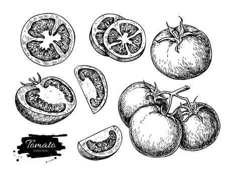 Tomate de dibujo vectorial conjunto. Aislado de tomate, verduras en rodajas pieza en rama. Ilustración grabada estilo. bosquejo comida vegetariana detallada. producto de mercado de la granja. Foto de archivo - 62263999