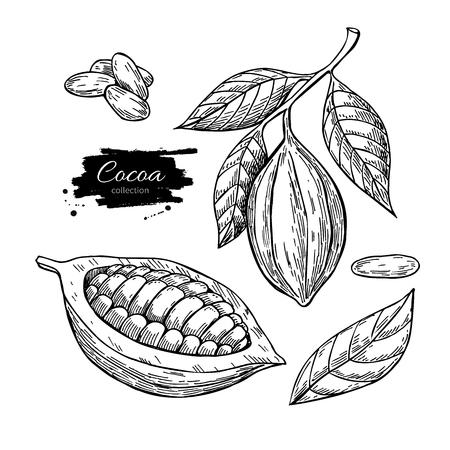 set Cocoa vector superfood tekening. Geïsoleerde hand getrokken illustratie op een witte achtergrond. Organische gezonde voeding. Geweldig voor banner, poster, label
