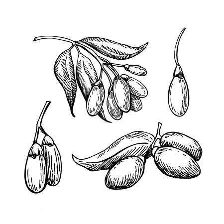 Goji berry vector superfood teken set. Geïsoleerde hand getekende illustratie op witte achtergrond. Organisch gezond voedsel. Groot voor banner, poster, label, teken
