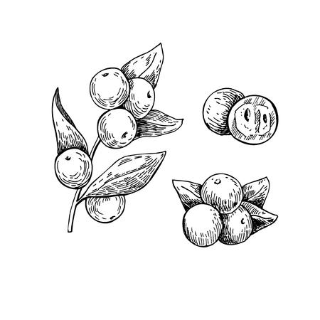 Camu Camu vector superfood tekening. Geïsoleerde hand getrokken illustratie op een witte achtergrond. Organische gezonde voeding. Geweldig voor banner, poster, label Stock Illustratie