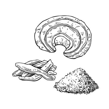 영지 버섯 벡터 슈퍼 푸드 드로잉입니다. 격리 된 손 흰색 배경에 그린 그림. 영지 분말, 버섯, 슬라이스 조각. 유기농 건강 식품. 배너, 포스터, 라벨에  일러스트