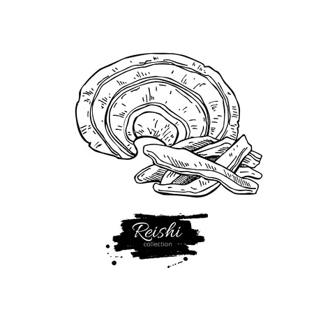 Reishi Pilz Vektor Supernahrungs Zeichnung. Isolierte Hand-Darstellung auf weißem Hintergrund gezeichnet. Organische gesundes Essen. Groß für Banner, Poster, Etiketten, Zeichen Standard-Bild - 63654777
