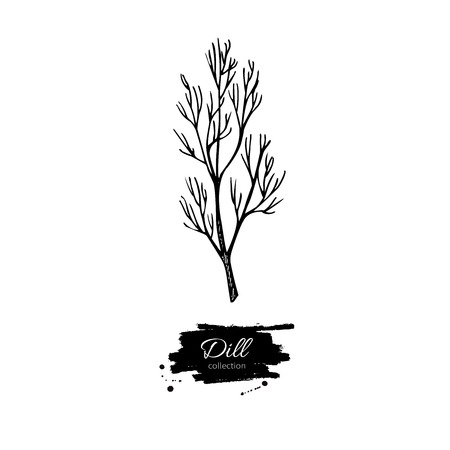 flavor: Dill vector hand drawn illustration. Isolated spice object. Engraved style seasoning. Detailed organic product sketch. Cooking flavor ingredient. Great for label, sign, icon