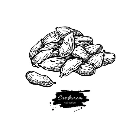 condiments: Cardamom seed heap vector hand drawn illustration. Isolated spice object. Engraved style seasoning. Detailed organic product sketch. Cooking flavor ingredient. Great for label, sign, icon Illustration