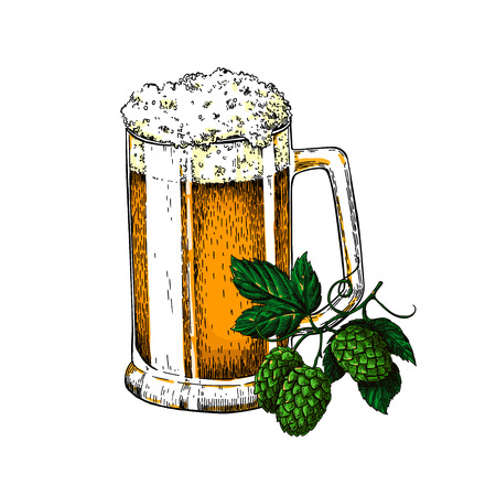alcoholic drink: Beer glass mug with hop. Sketch style vector illustration. Hand drawn isolated beverage object on white background. Colored alcoholic drink drawing. Great for restaurant, bar, pub menu, oktoberfest