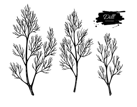 dill: Dill vector hand drawn illustration set. Isolated spice object. Engraved style seasoning. Detailed organic product sketch. Cooking flavor ingredient. Great for label, sign, icon Illustration