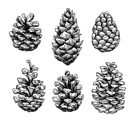 Pine cone set. Botanical hand drawn vector illustration. Isolated xmas pinecones. Engraved collection. Great for greeting cards, backgrounds, holiday decor