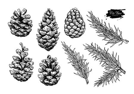 Sosnowe stożek i zestaw drzew jodłowych. Botaniczny ręcznie rysowane ilustracji wektorowych. Odosobnione xmas pinecones. Kolekcja grawerowana. Doskonały na karty okolicznościowe, tła, dekoracje wakacyjne Ilustracje wektorowe