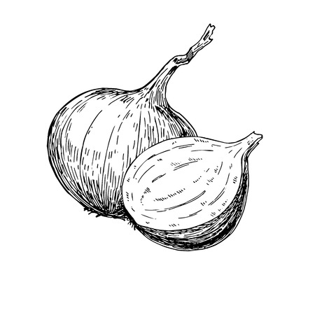 Onion hand drawn vector illustration. Isolated Vegetable engraved style object.Full and Half cutout slice. Detailed vegetarian food drawing. Farm market product. Great for menu, label, icon