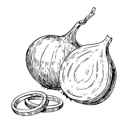 Zwiebel Vektor-Illustration Hand gezeichnet. Isoliert Gemüsestilobjekt eingraviert. Voll, Ringe und Halbausschnitt in Scheiben schneiden. Detaillierte vegetarisches Essen Zeichnung. Farm Marktprodukt. Groß für Menü, Etikett, Symbol Standard-Bild - 67180433