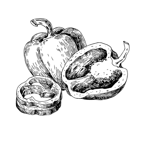 Pepper hand drawn vector illustration. Vegetable engraved style object, full, half and slices. Isolated bell pepper. Detailed vegetarian food drawing. Farm market product. Paprika icon