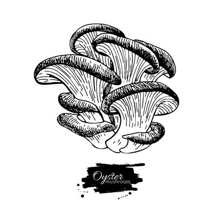 Oyster funghi disegnata a mano illustrazione vettoriale. disegno cibo Sketch isolato su sfondo bianco. prodotto biologico vegetariano. Grande per il menu, etichetta, confezione del prodotto, ricetta