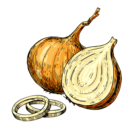 Onion hand drawn vector illustration. Isolated Vegetable artistic style object. Full, rings and Half cutout slice. Detailed vegetarian food drawing. Farm market product. Great for menu, label, icon Illustration