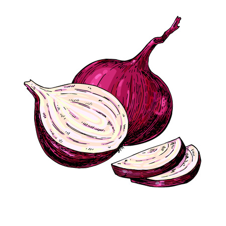 Red Onion hand drawn vector illustration. Vegetable Isolated object. Full, Half and cutout slice. Detailed vegetarian food drawing. Farm market product. Great for menu, label, icon