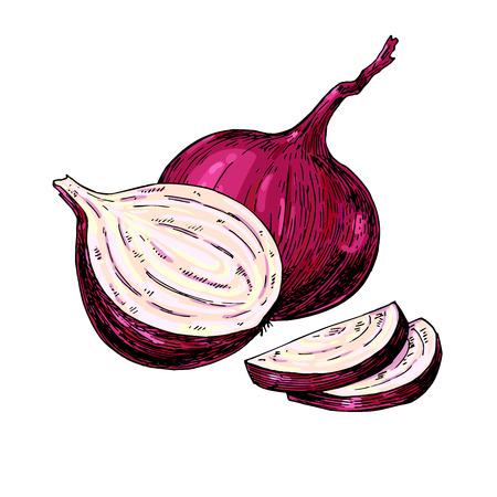 Red Onion hand getekende vector illustratie. Plantaardige Geïsoleerde object. Full, Half en uitsparing slice. Gedetailleerde vegetarisch voedsel tekening. Farm markt product. Groot voor het menu, etiket, pictogram
