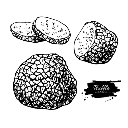 truffle: Truffle mushroom hand drawn vector illustration set. Sketch food drawing isolated on white background. Organic vegetarian product. Great  for menu, label, product packaging, recipe