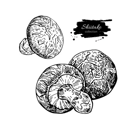Shiitake mushroom hand drawn vector illustration set. Sketch foo