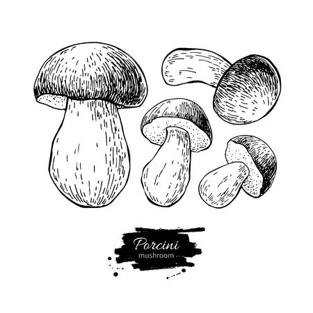 Porcini mushroom hand drawn vector illustration set. Sketch food
