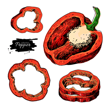 Pepper hand drawn vector set. Vegetable artistic style object, half and slices. Isolated bell pepper.