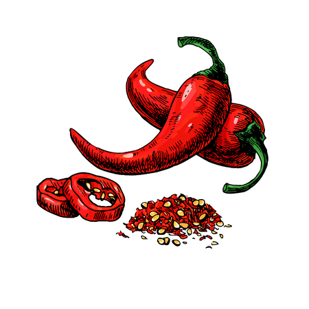 Chili Pepper hand drawn vector illustration. Vegetable artistic style object. Isolated hot spicy Vectores