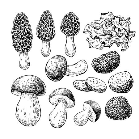hongo: mano dibuja ilustración vectorial de setas. iso dibujo boceto de alimentos Vectores