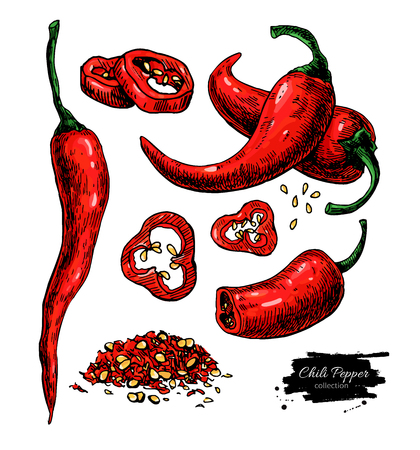 Chili Pepper hand drawn vector illustration. Vegetable artistic