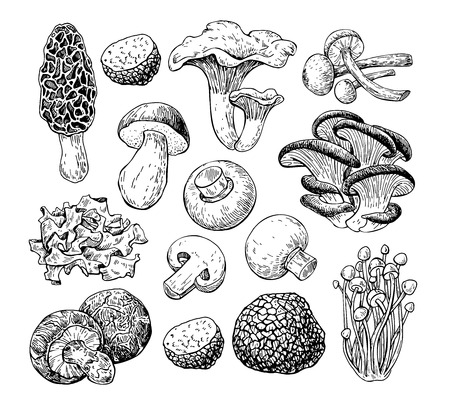 Paddestoel hand getekende vector illustratie. Schets voedsel tekening iso
