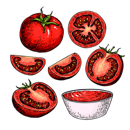 Tomaat vector tekening set. Geïsoleerde tomaat, gesneden stuk en tomatensaus. Groente