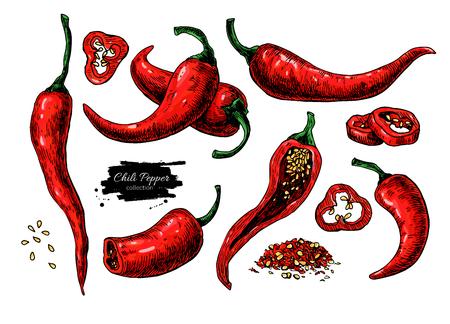 唐辛子の手には、ベクター グラフィックが描画されます。野菜の芸術的なスタイル オブジェクト。分離されたホット スパイシー