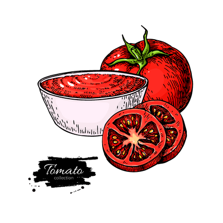 Tomato sauce Drawing. Vector isolated illustration with bowl full of pasta and tomato slice. Detailed vegetarian food sketch. Farm market product. Great for label, poster, sign