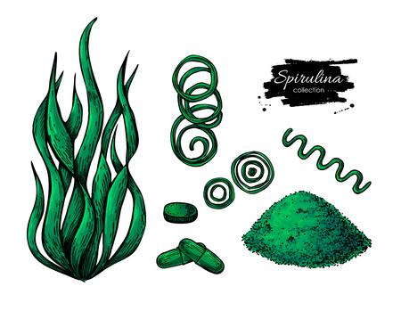 Spiruline vecteur à la main en poudre aux algues marines. Isolé Spirulina algues, poudre et pilules dessin sur fond blanc. Illustration de style artistique Superfood. Schéma d'alimentation biologique bio Vecteurs