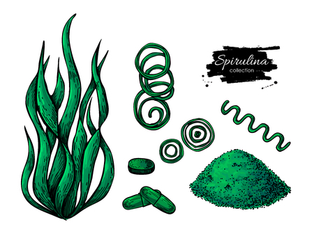 Spirulina seaweed powder hand drawn vector. Isolated Spirulina algae, powder and pills drawing on white background. Superfood artistic style illustration. Organic healthy food sketch Vettoriali