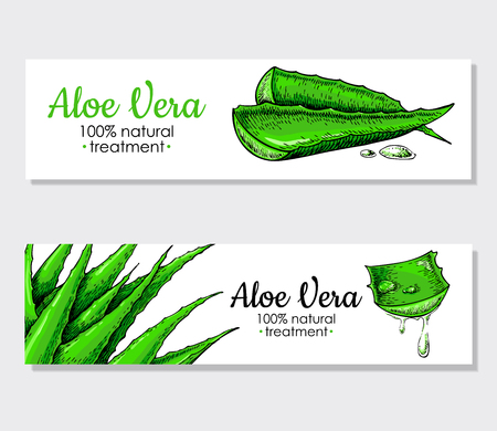 aloe vera plant: Vector aloe vera hand drawn banner.  Natural cosmetic ingredient. Botanical drawing of lemongrass plant . Herbal treatment. Great for poster, label, brochure, template, flyer, business promote.