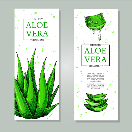 Vector aloe vera hand drawn banner.  Natural cosmetic ingredient. Botanical drawing of lemongrass plant . Herbal treatment. Great for poster, label, brochure, template, flyer, business promote.