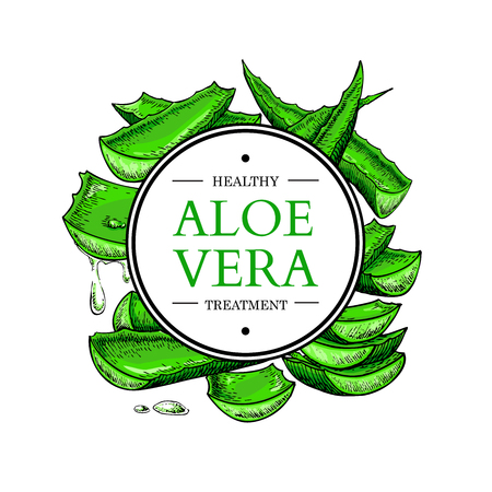 aloe vera plant: Aloe vera vector illustration with frame. Hand drawn artistic isolated object on white background. Natural cosmetic ingredient. Botanical drawing of lemongrass plant sliced leaves. Herbal treatment. Great for banner, poster, label, brochure template