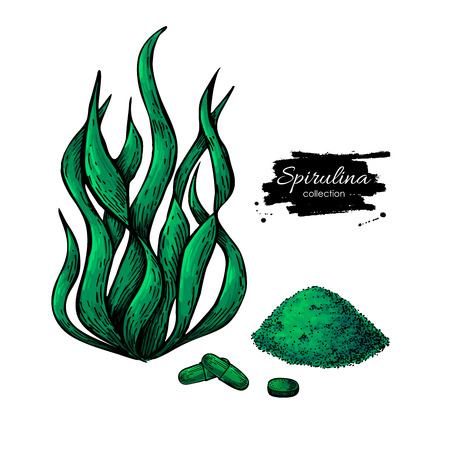 Spirulina seaweed powder hand drawn vector illustration. Isolated Spirulina algae, powder and pills on white background. Superfood artistic style drawing. Organic healthy food sketch Illustration