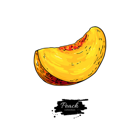 Peach slice vector drawing. Isolated hand drawn object on white