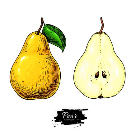 Disegno vettoriale pera Pera piena disegnata a mano isolata ed insieme affettato dei pezzi. Stile artisitc di frutta estiva Archivio Fotografico - 73815648
