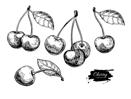 Cherry vector drawing set. Isolated hand drawn berry on white background. Summer fruit engraved style illustration. Detailed vegetarian food. Great for label, poster, print Vectores