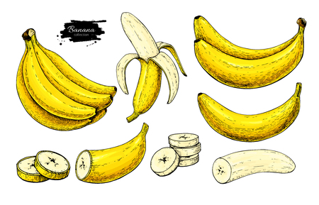 Banana set vector drawing. Isolated hand drawn bunch, peel banana and sliced pieces.  Summer fruit artistic style illustration. Detailed vegetarian food. Great for label, poster, print