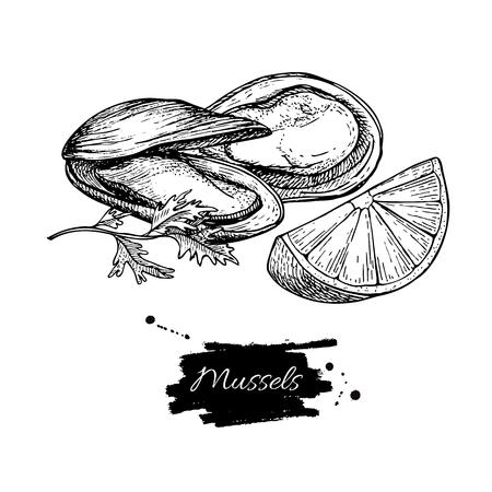 ムール貝の手には、ベクター グラフィックが描画されます。刻まれたヴィンテージ風。オイスターのスケッチ。