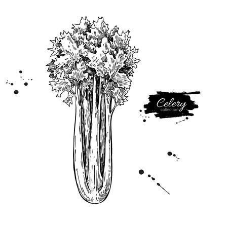 セロリの手には、ベクター グラフィックが描画されます。孤立した野菜には、スタイル オブジェクトが刻まれています。詳細なベジタリアン料理