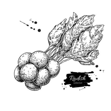 大根束手描きのベクトル図です。孤立した野菜には、スタイル オブジェクトが刻まれています。詳細なベジタリアン料理